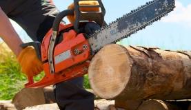 Wann darf man Bäume fällen?